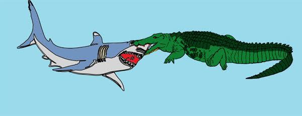 Saltwater crocodile vs tiger - photo#46